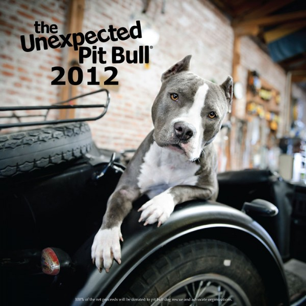 The Unexpected Pit Bull — 2012 calendar