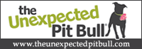 The Unexpected Pit Bull